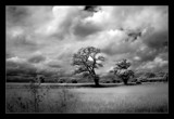 Infra Norfolk countryside by JQ, Photography->Landscape gallery