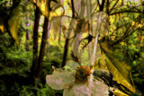 Antidotes from a Rainforest by casechaser, Photography->Manipulation gallery