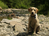 at the creek by Winkler, photography->pets gallery