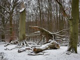 Big tree down by Paul_Gerritsen, photography->landscape gallery