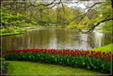 Keukenhof 12 by corngrowth, photography->gardens gallery