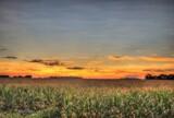 Maize Sunset by Mvillian, photography->sunset/rise gallery