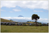 ilha do Pico, Açores by ppigeon, Photography->Landscape gallery