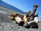 Drift Wood on Alki by aplfalcon, Photography->Landscape gallery