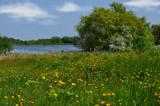 Mellow Yellow by biffobear, Photography->Landscape gallery