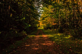 Autumn Trail by Eubeen, photography->landscape gallery