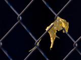 Leaf by JasonSemko, Photography->Flowers gallery