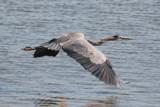 Flight by rahto, Photography->Birds gallery