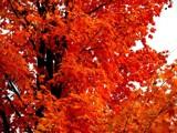 Real Orange! by marilynjane, Photography->Landscape gallery