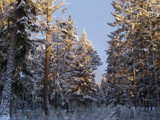 First Snow in WA January 2007 by rhayes022104, Photography->Landscape gallery