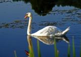 Sam Returns by SatCom, Photography->Birds gallery