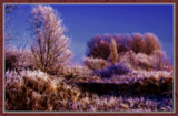 Winter In Zeeland 2009 (20) by corngrowth, Photography->Landscape gallery
