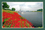 Zeeland In Bloom 04, Flowering Canal Dike by corngrowth, Photography->Landscape gallery