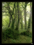 Trees and Ferns. by Sivraj, photography->landscape gallery