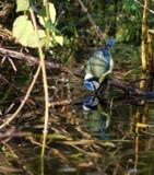 The Drinker... by biffobear, photography->birds gallery