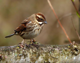 Female by biffobear, photography->birds gallery