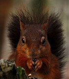 Nuts by biffobear, photography->animals gallery