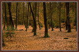 Wood In Disguise 4 (of 4) by corngrowth, Photography->Landscape gallery