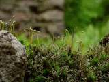 Moss and Lichen by kjh000, praetori arbitrio gallery