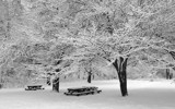 After snowing by hsu0504, photography->landscape gallery