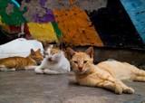 Cats by JaiJoli, photography->pets gallery