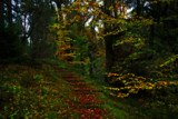 Hindhope Steps by biffobear, photography->landscape gallery