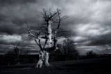 Oak by coram9, photography->landscape gallery