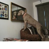 Jayden checking herself (and me) out by BosNana, photography->pets gallery
