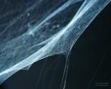 Webmaster by samarn, Photography->Macro gallery