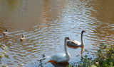 Jealous Ducks by tadurham, Photography->Animals gallery