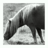 black and white pony by JQ, Photography->Animals gallery