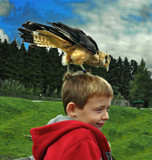 Yellow-headed caracara by biffobear, photography->birds gallery