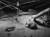 Aardvark by Pistos, photography->animals gallery