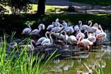 Sleepy by Ramad, photography->birds gallery