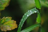 After rain by elektronist, photography->water gallery