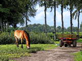 Country Scene by Ramad, photography->landscape gallery