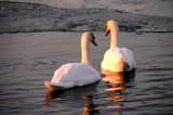 Sunset talk by rozem061, photography->birds gallery