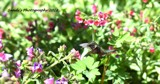 My First Hummingbird 2018 by tigger3, photography->action or motion gallery