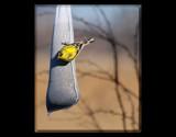 Hittin' The Sack by tigger3, Photography->Birds gallery