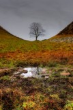 Sycamore Gap by biffobear, photography->landscape gallery