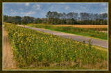 Summer Wildflowers 11 by corngrowth, Photography->Landscape gallery