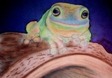 Mr. Sticky by mthikerj, Contests->Draw a Frog gallery