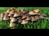Wet grass & umbrellas by Paul_Gerritsen, Photography->Mushrooms gallery