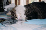 Civil War Cat-Nap by robtrapp47, Photography->Pets gallery