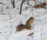 My New Little Buddy by Jimbobedsel, Photography->Animals gallery