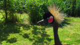 Crazy Hairstyle - Crazy Bird by braces, photography->birds gallery