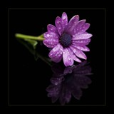 table top flower by JQ, photography->flowers gallery