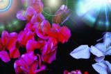 Rojo. Negro. Blanco. by Palacio, photography->flowers gallery
