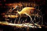 A Migratory Bird #3 by tigger3, photography->birds gallery