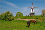 Horses And A 'Cow' by corngrowth, photography->mills gallery